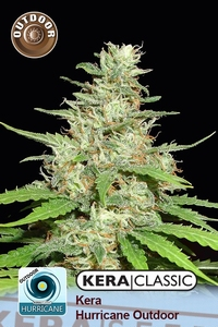 Kera seeds - Hurrican Outdoor
