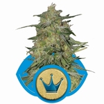 RQS - Royal Highness
